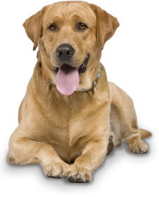 Collection Png Dog Clipart image #22651