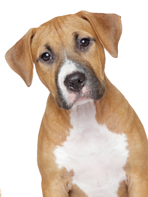 dog transparent png pictures free icons and png backgrounds