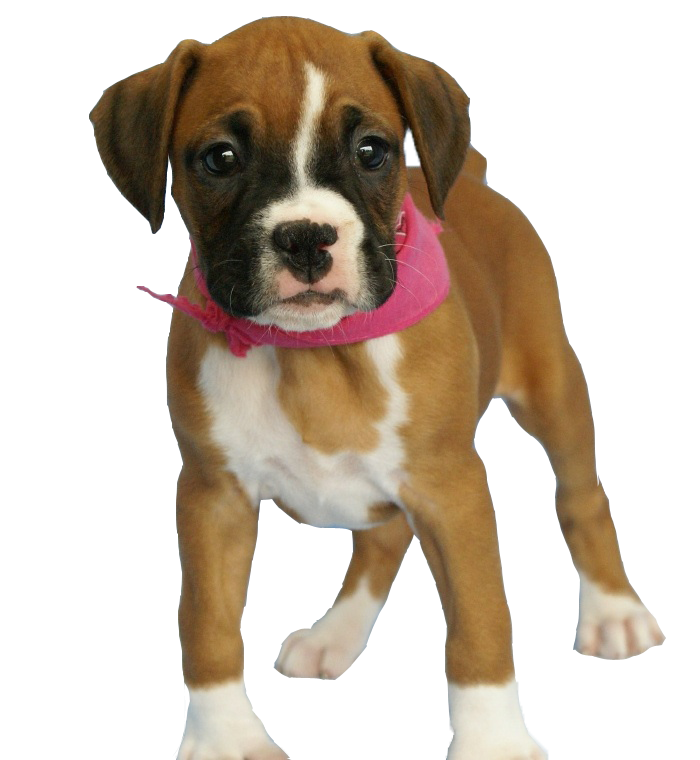 Download Free High-quality Dog Png Transparent Images image #22656