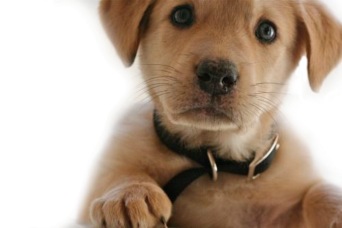 Collections Best Png Dog Image image #22661