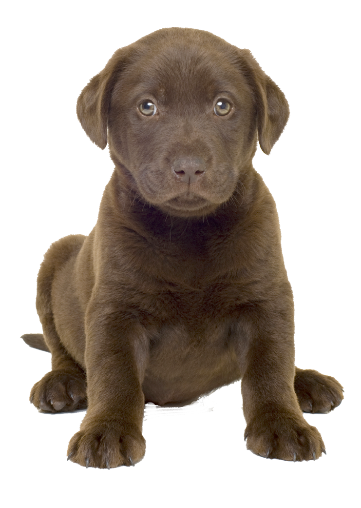 Dog Clipart Best Png image #22664
