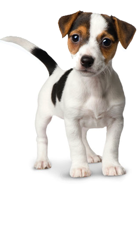 Png Dog Vector image #22666