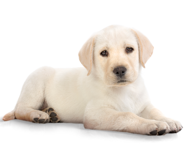 Use These Dog Vector Clipart image #22642