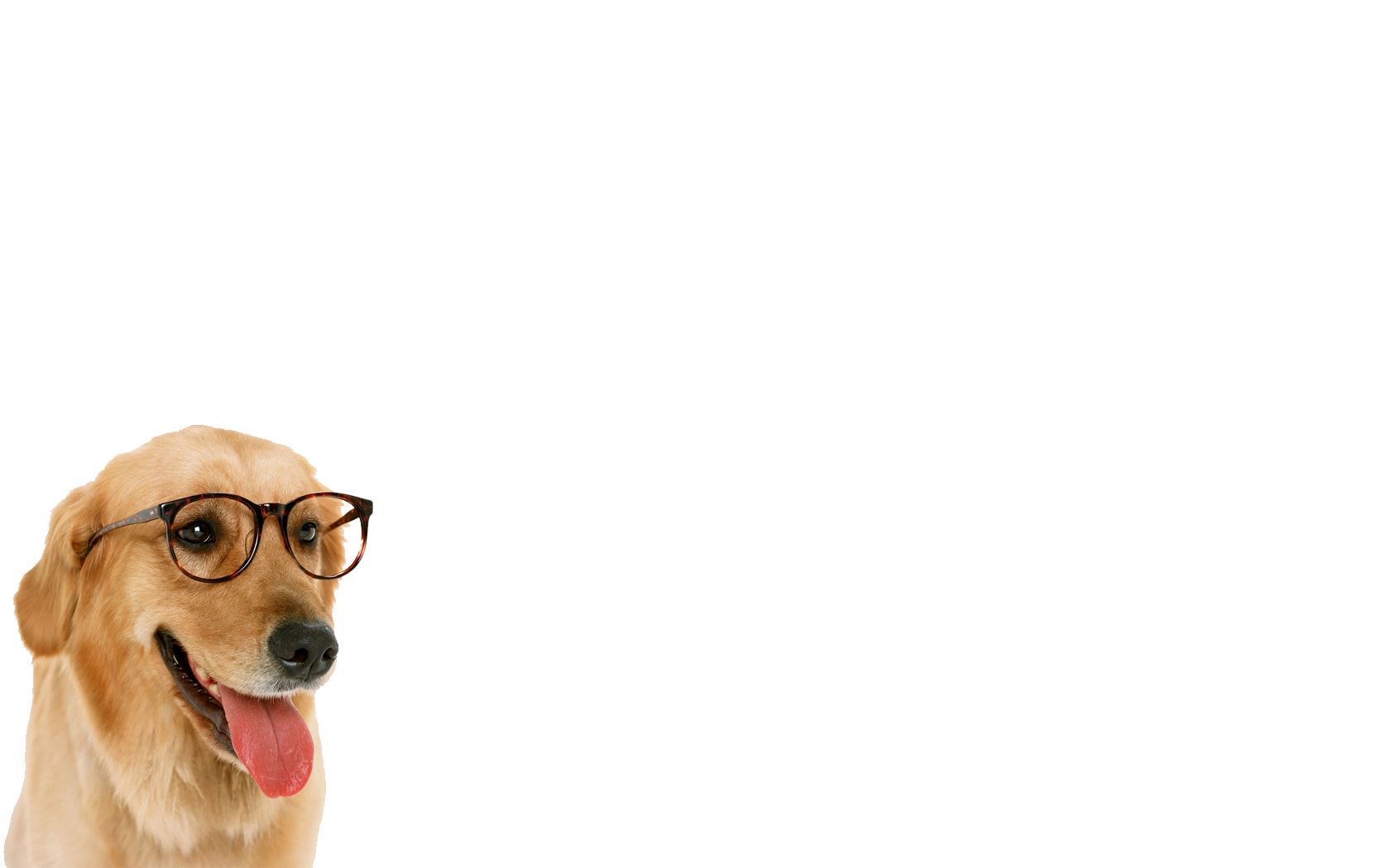 Download Free High-quality Dog Png Transparent Images image #22668