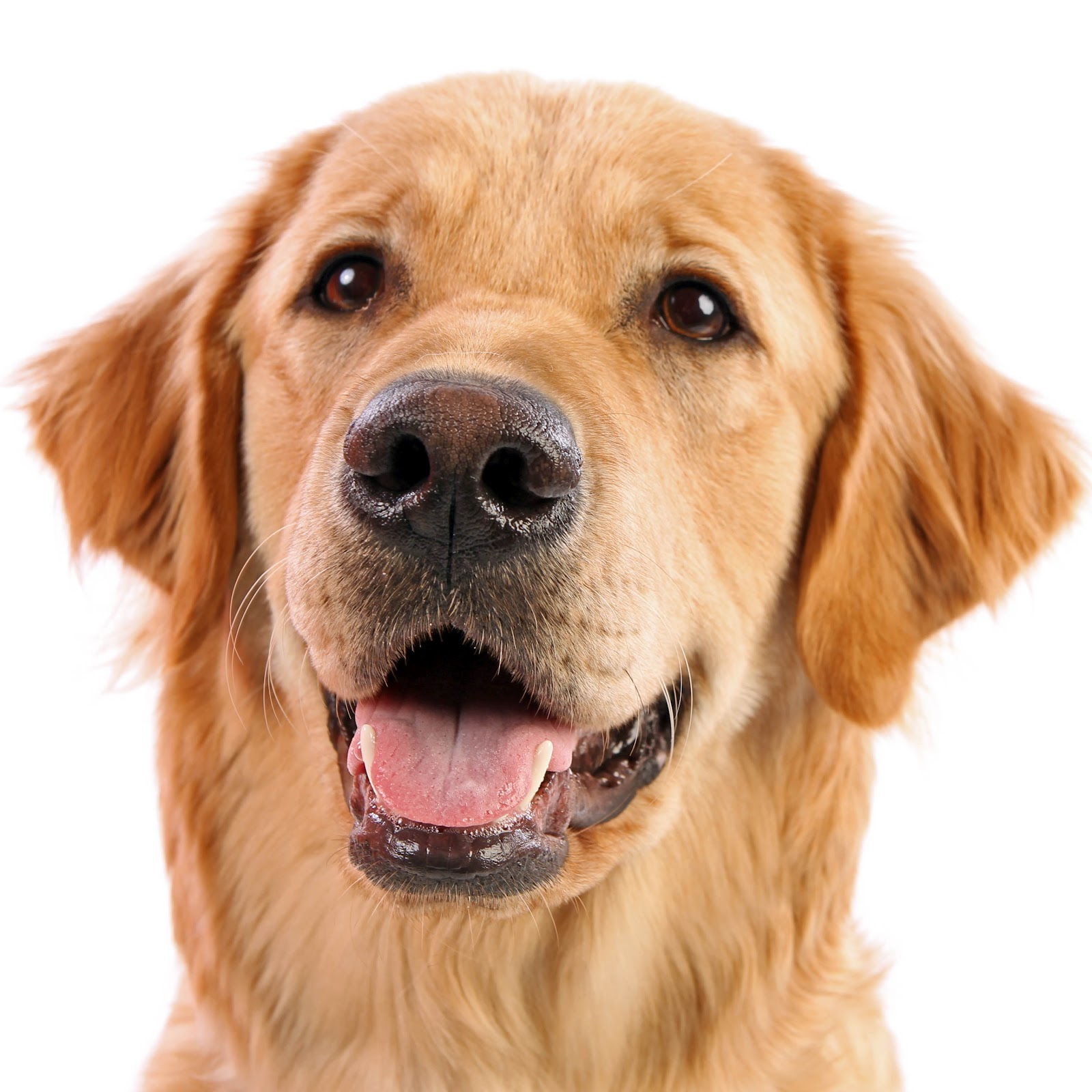 Related dog png images