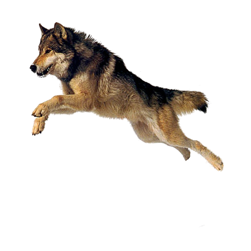 Get Dog Png Pictures image #22644