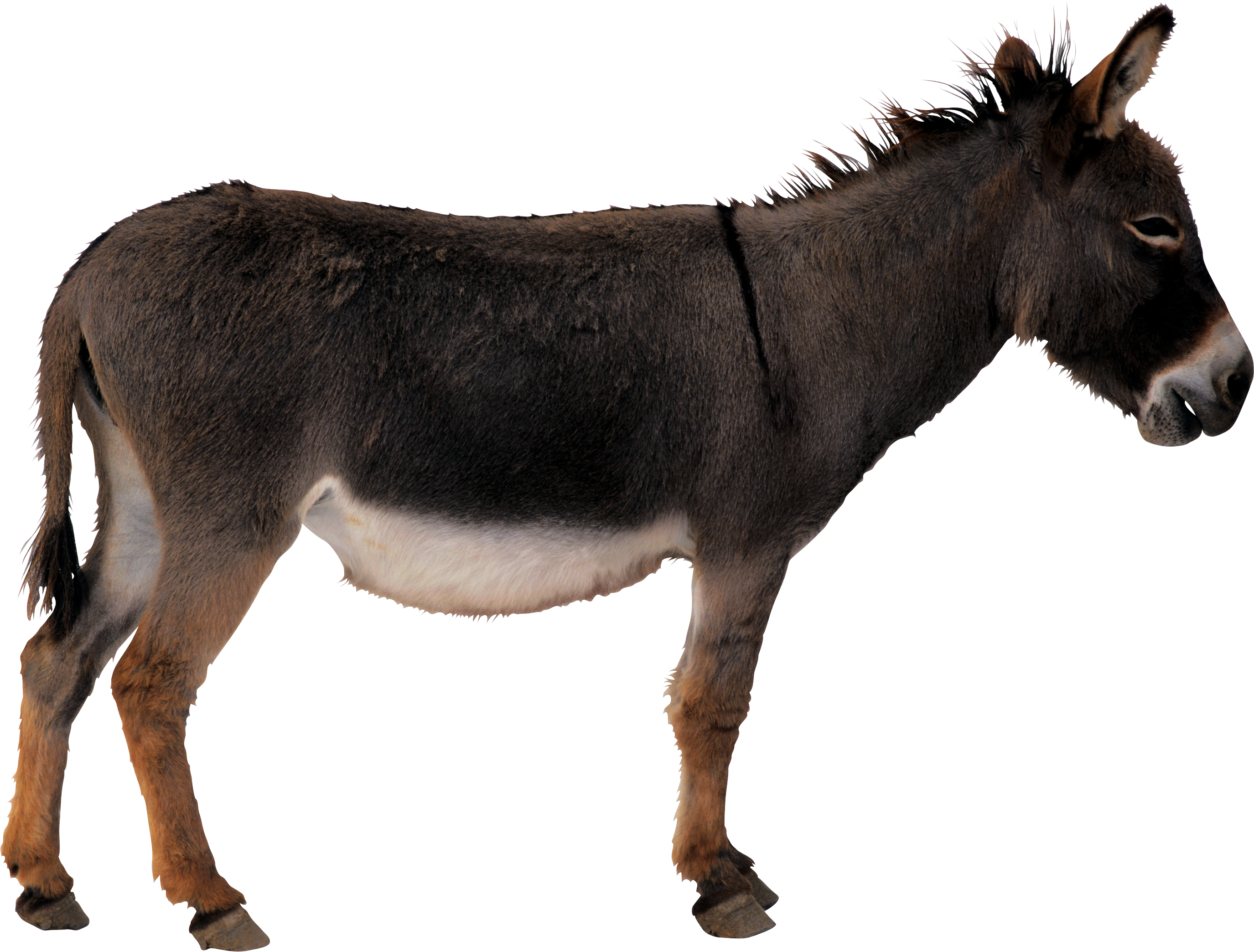 Donkey Animal Transparent PNG image #47501