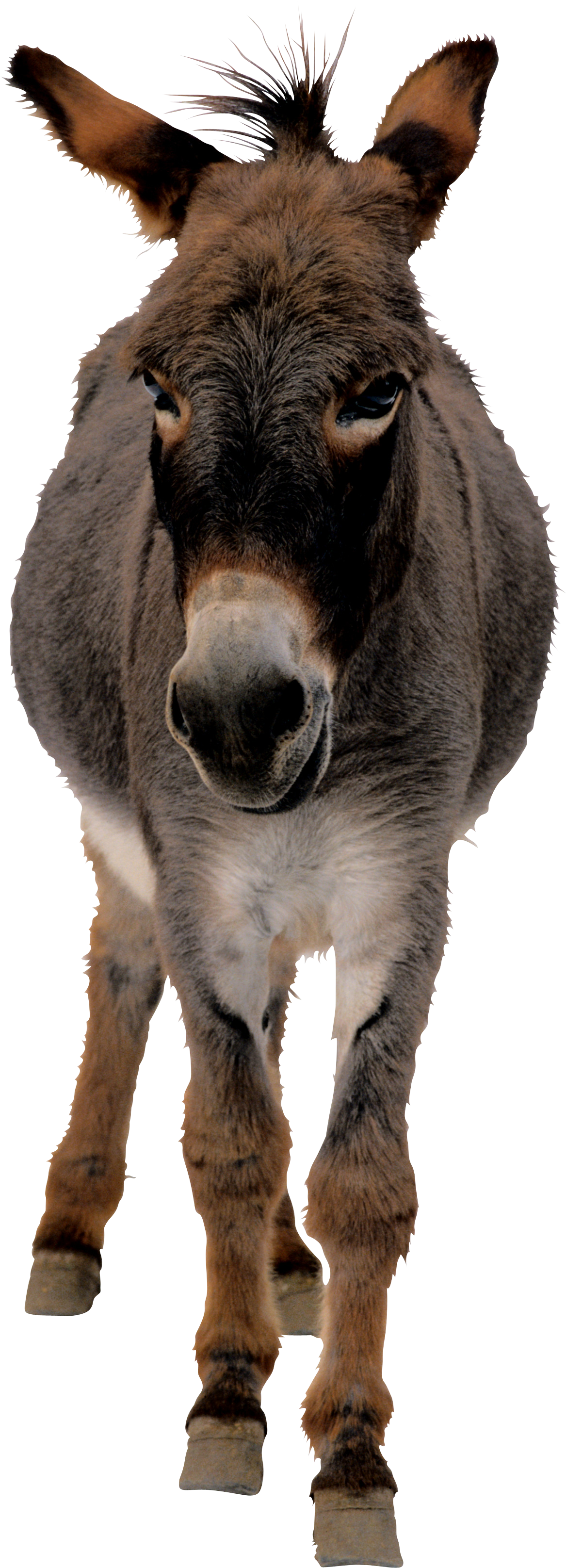 Donkey Designs Png image #47506