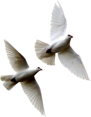 Dove Flying Away Png Image image #41758