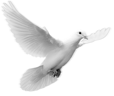Dove Images Png image #41757