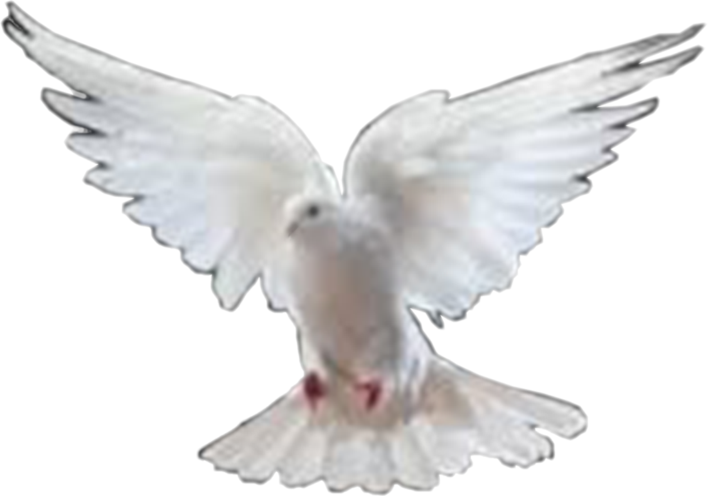 Dove Images Png image #41737