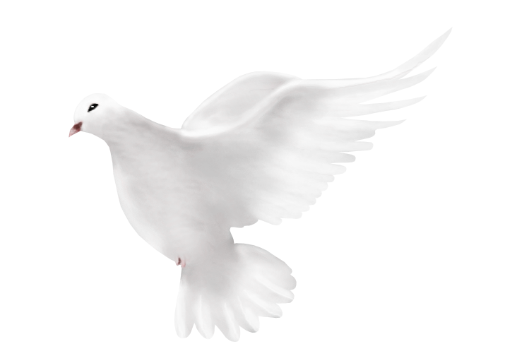 Dove Peace Png image #41756