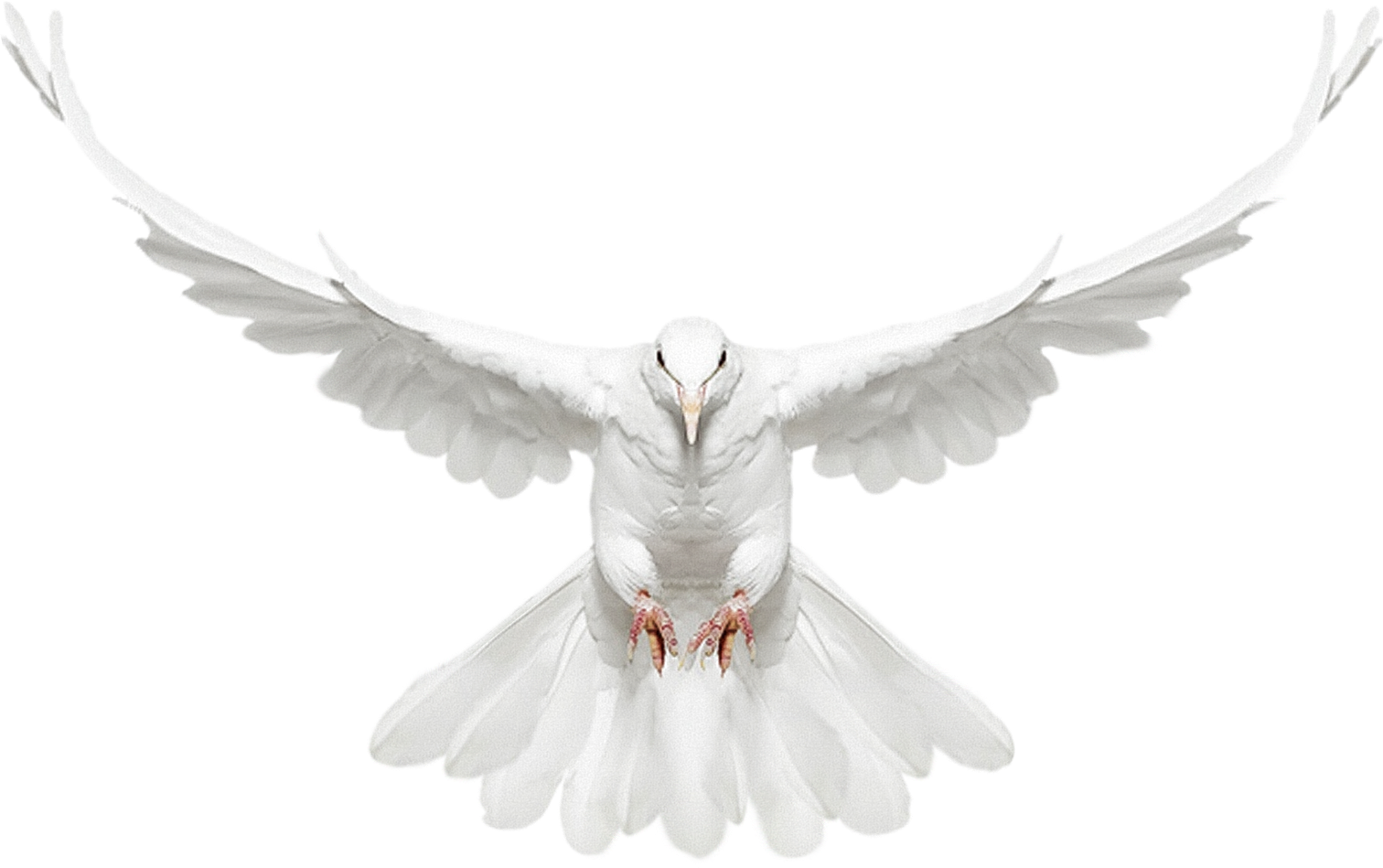 Dove Png image #41747