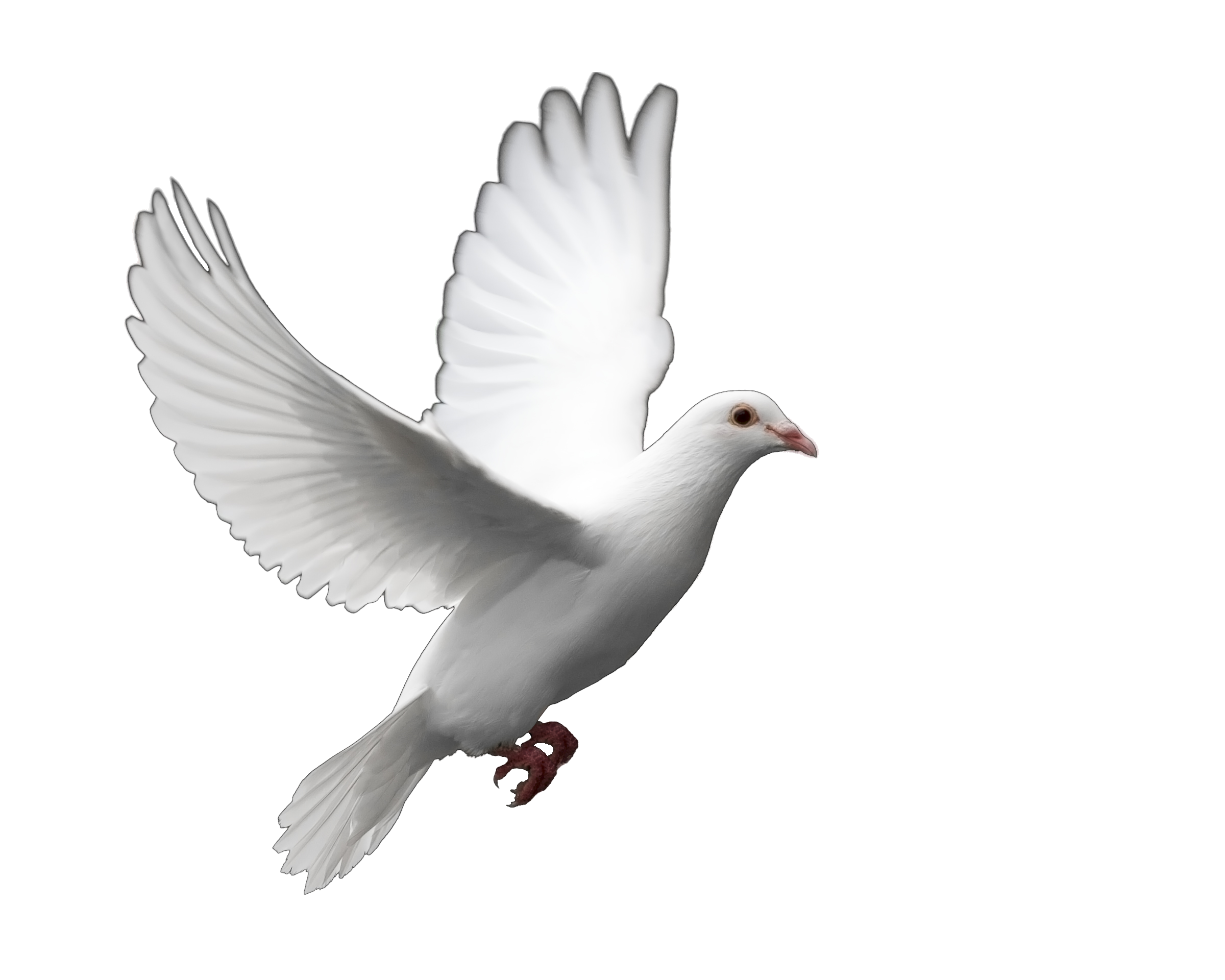Dove Png Photo image #41754