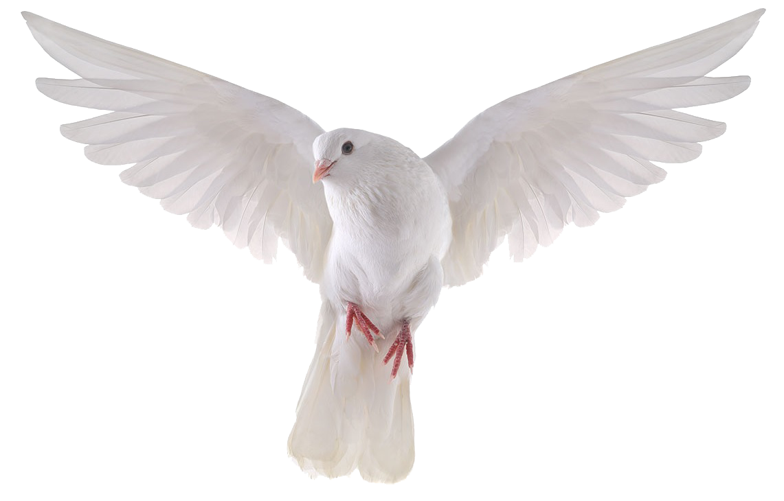 dove png picture