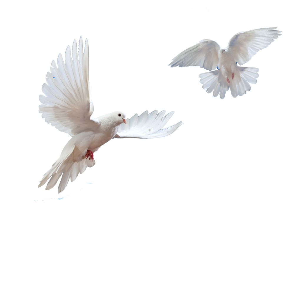 Doves Flying In Sky Png image #41759