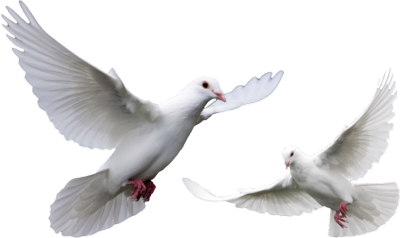 Doves Png image #41760