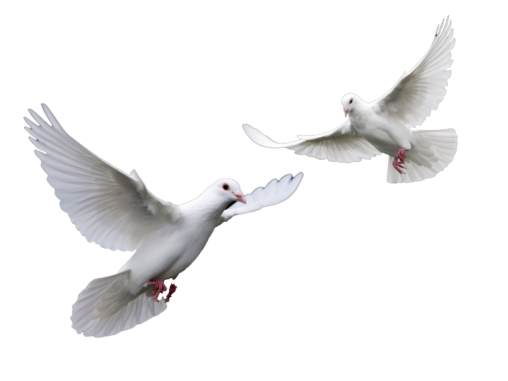 Doves Wedding Doves Png image #41735