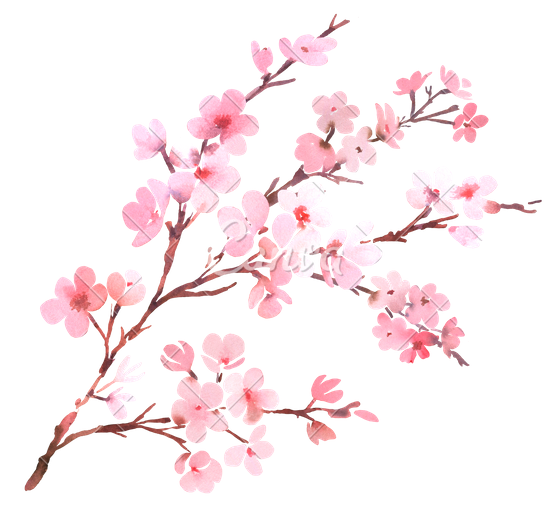 Download Cherry Blossom High-quality Png image #45508