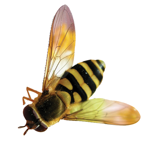 Download Vector Bee Png Free image #45405