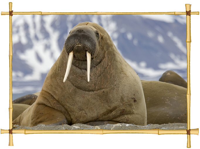 Download Walrus Icon Clipart image #48647