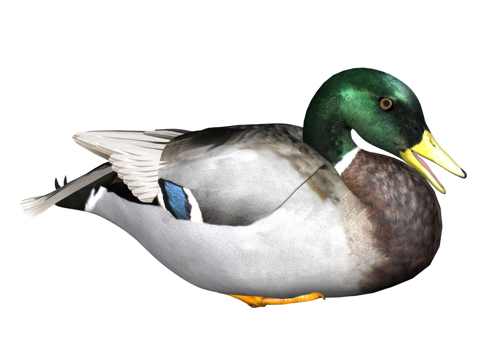 Hd Duck Image In Our System