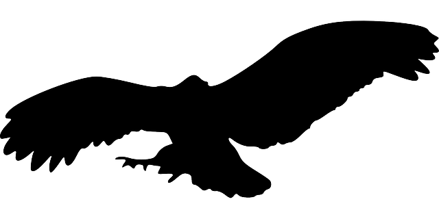 EAGLE, BIRD, ANIMAL, FLYING, SILHOUETTE  Public Domain Pictures