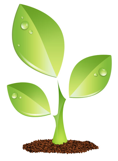 Ecology, Flower, Garden, Leaf, Leaves, Plant Icon image #34777