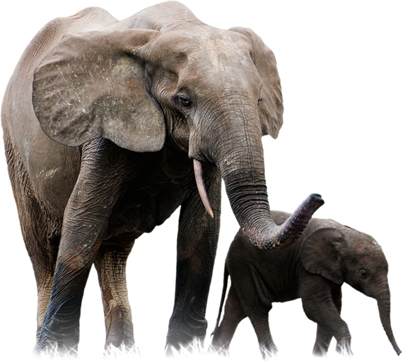 Elephant And Baby Picture Png image #43243