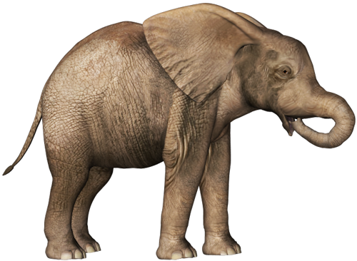Elephant Baby Clipart Png