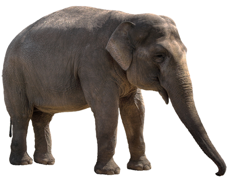 Elephant Hd png