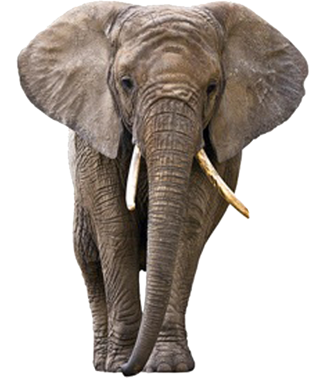 Elephant long tusks png