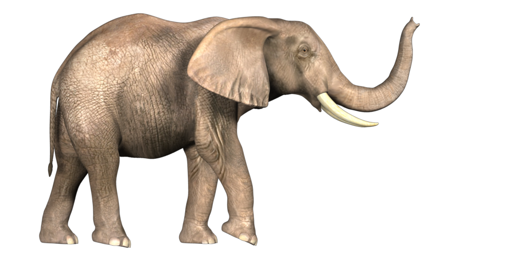 Elephant Photo Png image #43244