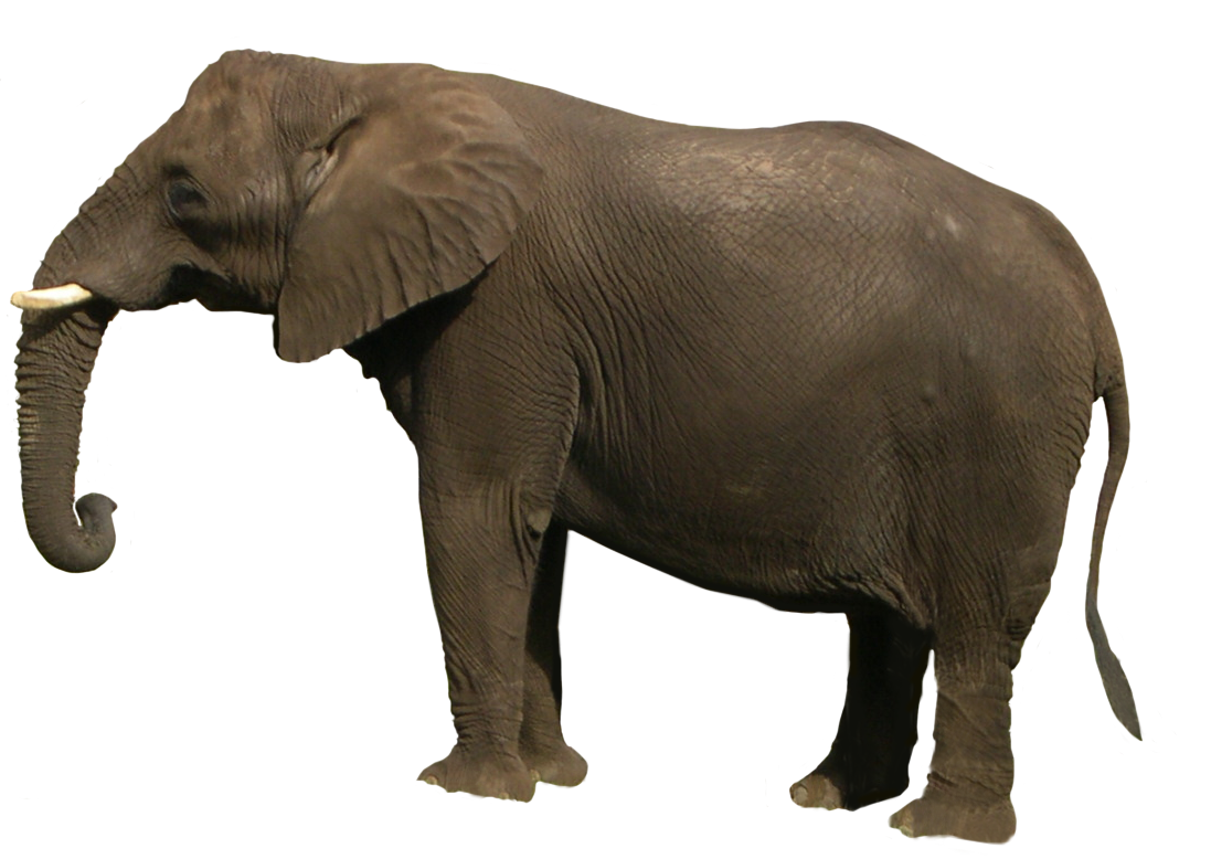 Best Free Elephant Png Image