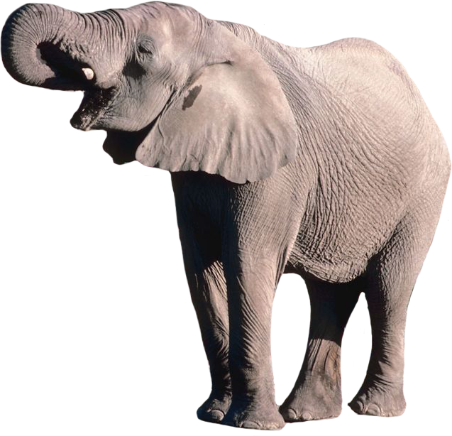 Elephant Download Png High-quality image #43227