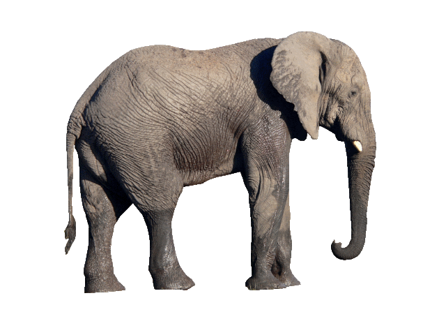 Transparent Elephant Background Png image #43242