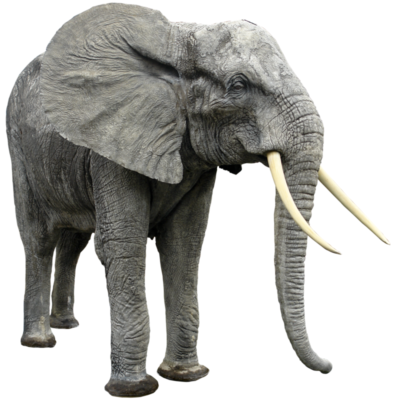 Elephant png HQ in graphic
