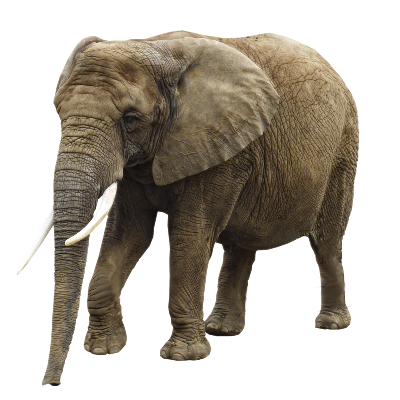 Elephant Png Image 43222 Free Icons And Png Backgrounds