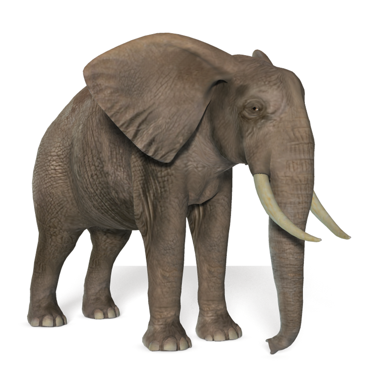 Elephant png picture