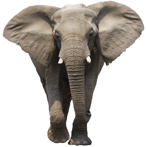 Elephant PNG Transparent image #43218