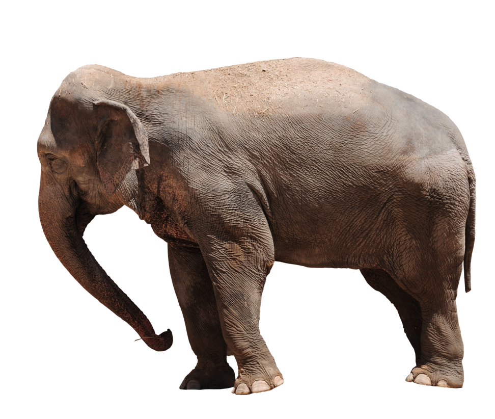 Elephant Png Transparent image #43240