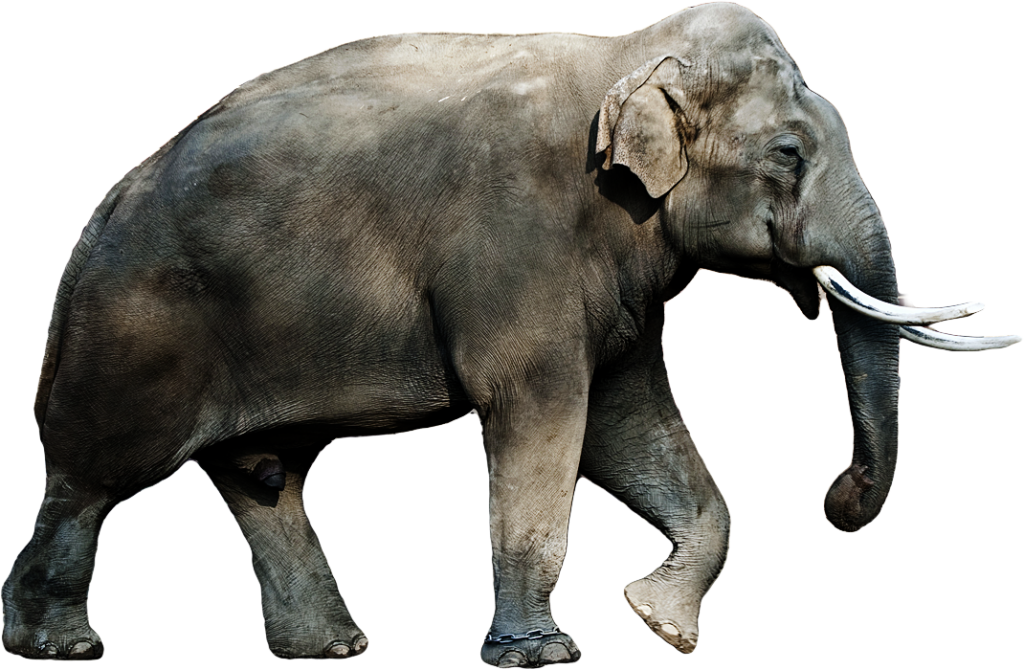 Elephants PNG images