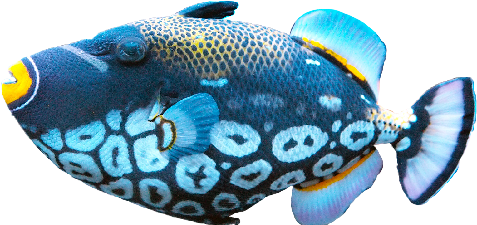exotice blue fish png