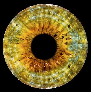 Eyes PNG image #42313