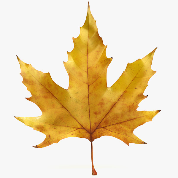 Fall Leaf Icon 3d Model Realistic Autumn image #41718