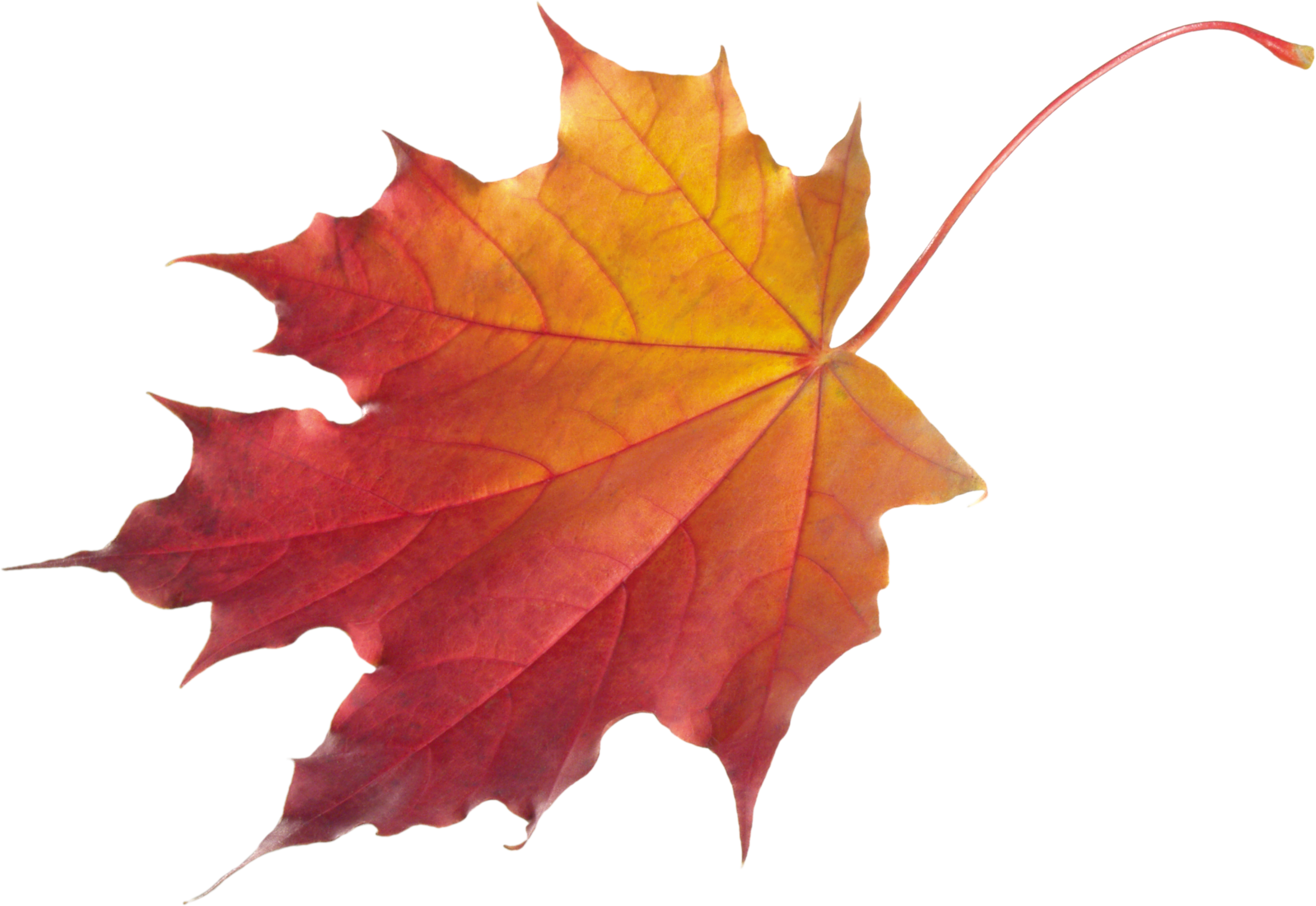 Falling Leaves Transparent Png Free Icons And Png