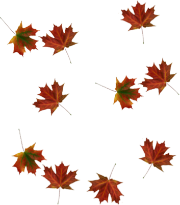 Picture PNG Falling Leaves image #32634