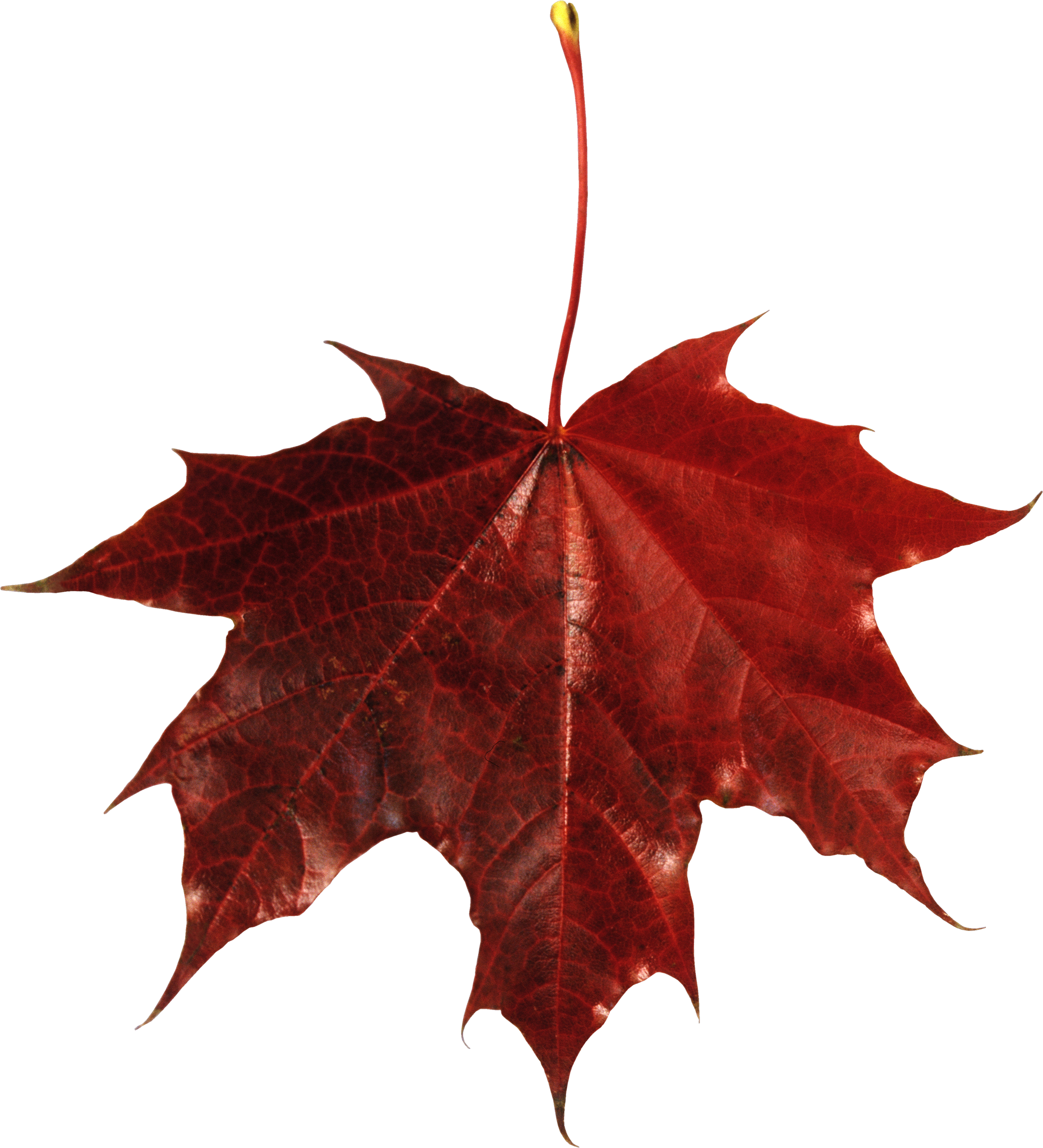 Free Falling Leaves Download Vector Png image #32647