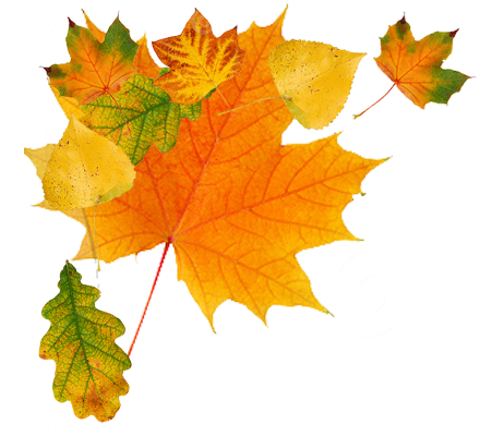 Falling Leaves PNG HD image #32650