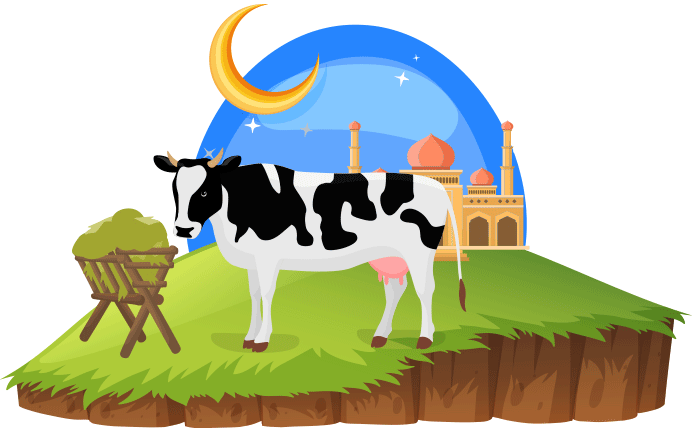 Feast of sacrifice, eid qurban, eid mubarak, cow